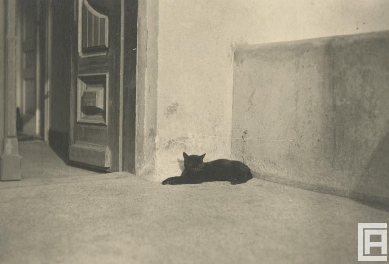 Czarny kot leżący w narożniku na białej podłodze.